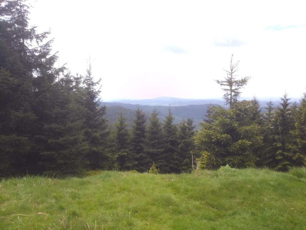 Einfach viel und wirklich schöner Wald - ich liebe es...